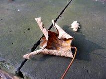Baumblatt auf der Straße Lizenzfreies Stockbild