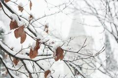 Baumblätter bedeckt mit Schnee Stockfotos