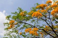 Baumblume auf Cloudscape stockbilder