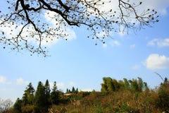 Baumblume auf dem Gebiet Stockfotografie