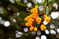 Baumblumen Stockbilder
