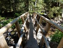 Baumbrücke Lizenzfreie Stockbilder