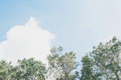 Baumbrunch auf blauem Himmel Stockbilder