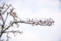 Baumbrunchs bedeckt durch Schnee in BRITISCHEM Winter 3 Stockfotografie