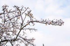 Baumbrunchs bedeckt durch Schnee in BRITISCHEM Winter 2 Lizenzfreie Stockfotografie