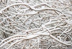 Baumbrunchs bedeckt im Schnee. Stockbilder