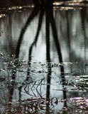 Baumbrunchs mit den Knospen während der Nacht im Wasser Lizenzfreies Stockfoto