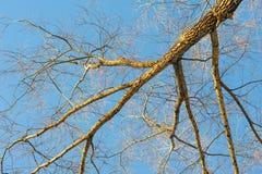 Baumbrunchs und -stämme im Wald im Vorfrühling Stockbild