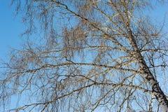 Baumbrunchs und -stämme im Wald im Vorfrühling Stockfotografie