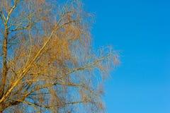 Baumbrunchs und -stämme im Wald im Vorfrühling Lizenzfreies Stockbild