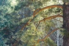 Baumbrunchs und -stämme im Wald im Vorfrühling Lizenzfreie Stockfotografie