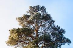 Baumbrunchs und -stämme im Wald im Vorfrühling Stockfoto