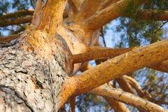 Baumbrunchs und -stämme im Wald im Vorfrühling Lizenzfreie Stockbilder