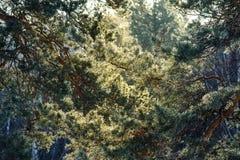 Baumbrunchs und -stämme im Wald im Vorfrühling Lizenzfreie Stockfotos