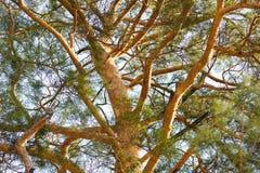 Baumbrunchs und -stämme im Wald im Vorfrühling Stockfotos
