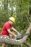 Baumchirurg, der Kettensäge gefallenen Baum verwendet Lizenzfreies Stockfoto