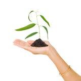 Baumeintragfaden in der Hand Stockfoto
