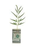 Baumeintragfaden, der vom Dollarschein wächst Lizenzfreie Stockfotografie