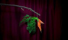 Baumelnde Karotten Lizenzfreie Stockbilder