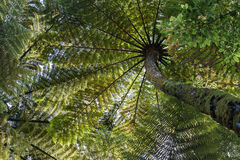 Baumfarne im Porzellan Stockbild