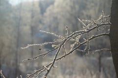Baumfeld und -schnee Stockbilder