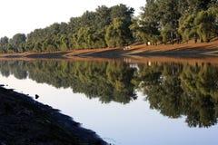 Baumflußufer Stockfotos