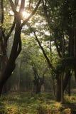Baumgarten in Cubbon-Park in Bangalore Indien Lizenzfreies Stockbild