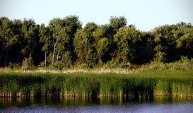 Baumgrenze Lizenzfreie Stockbilder