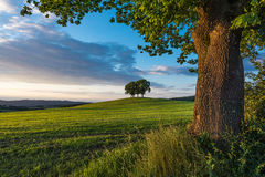 Baumgruppe auf einem Hügel Stockbilder