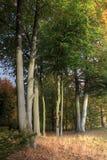 Baumgruppe im Herbst Stockfotos