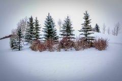 Baumgruppe lokalisiert im steifen Schnee Lizenzfreies Stockfoto