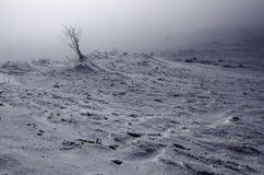 Baumgruppe versteckt im Nebel in den Bergen nur ein Baum gezeigt Lizenzfreie Stockbilder