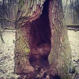 Baumhöhle in einem Holz im Frühjahr Stockbild
