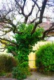Baumhaus-Baumreflexion im Wassergrünhintergrund stockfoto