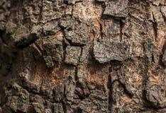 Baumhaut schönes texutre Stockbild