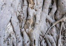 Baumhauthintergrund Lizenzfreie Stockfotos