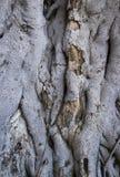 Baumhauthintergrund Stockfoto