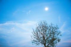 Baumhintergrund ist blauer Himmel Und ein kleiner Stern mit einem Mond Stockfotos