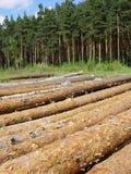 Baumholzschlag Stockbilder