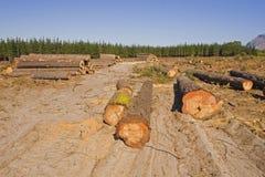 Baumholzschlag in einem Wald Stockfotos