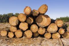 Baumholzschlag in einem Wald Stockfoto