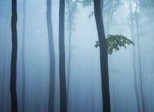 Baumkabel breiten sich und Blätter in einem kalten Wald aus Stockbilder