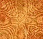 Baumkabelbeschaffenheit Lizenzfreies Stockfoto