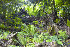Baumklotz, Farn, Moos im Wald Stockfoto