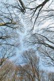 Baumkronen Ansicht von unten Ansicht von unten von Bäumen und von Niederlassungen Stockfoto