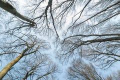 Baumkronen Ansicht von unten Ansicht von unten von Bäumen und von Niederlassungen Lizenzfreies Stockbild
