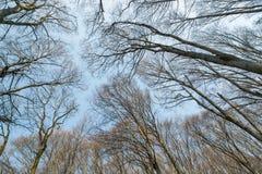 Baumkronen Ansicht von unten Ansicht von unten von Bäumen und von Niederlassungen Lizenzfreie Stockfotos