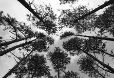 Baumkronen auf Himmel Stockfotos