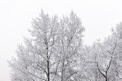Baumkronen im Winter Stockfotos