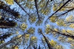 Baumkronen und blauer Himmel Lizenzfreie Stockfotos
